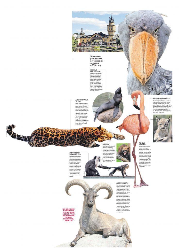 К нам едет китоглав: Каких животных представит зоопарк в юбилейный год