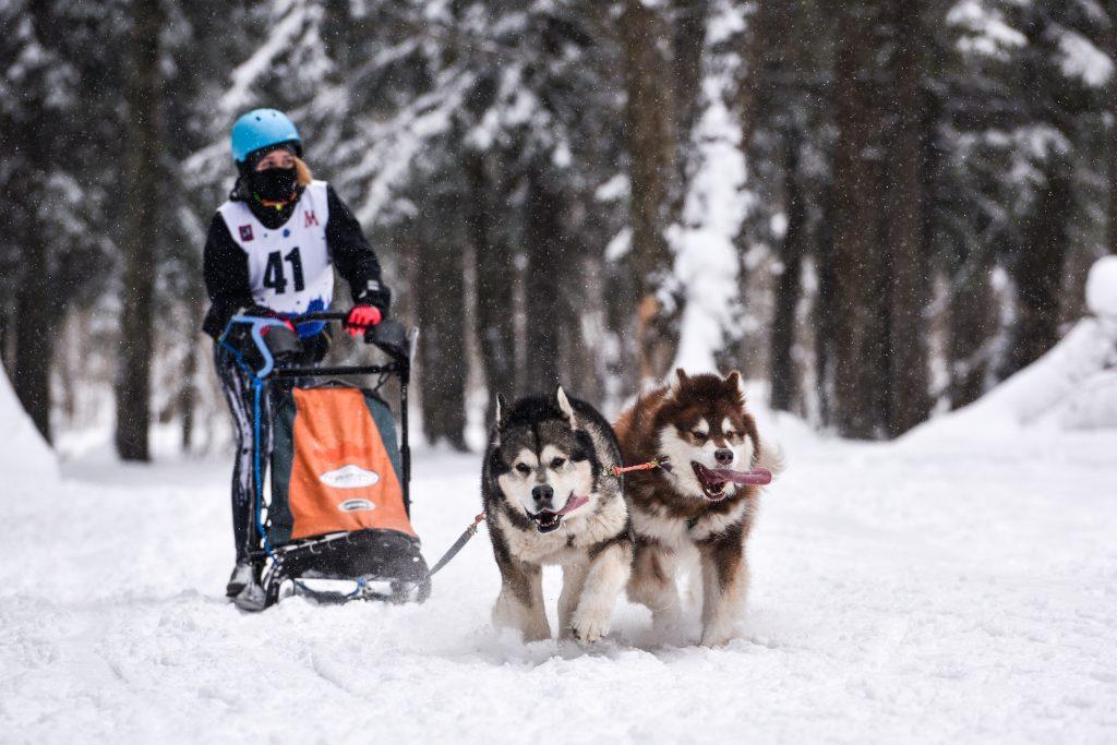 Верные друзья Аляска и Тигр привезли к победе