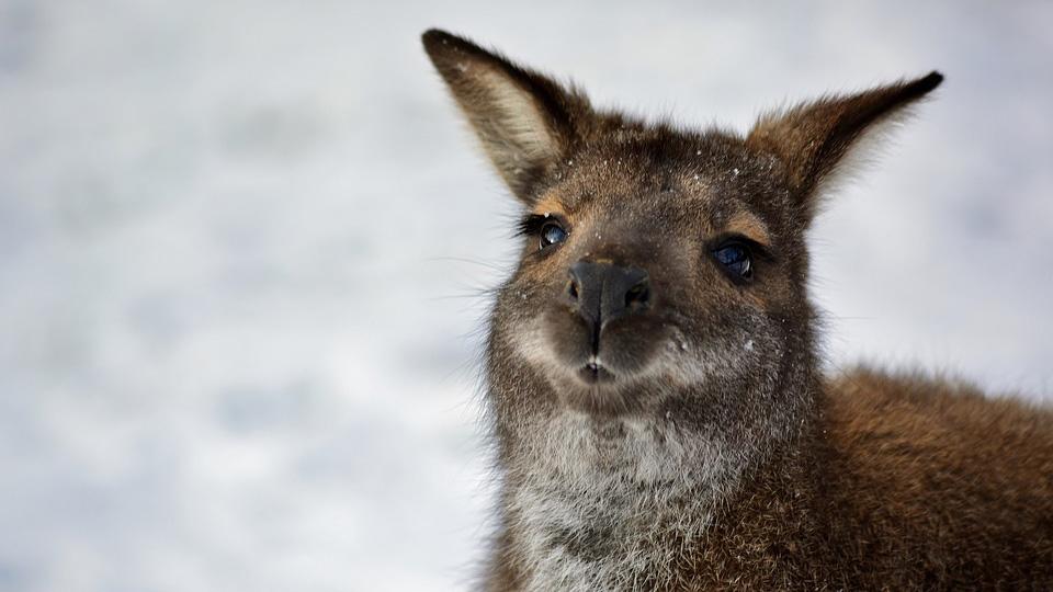 Недавно в Австралии выпал снег. https://pixabay.com/ru/