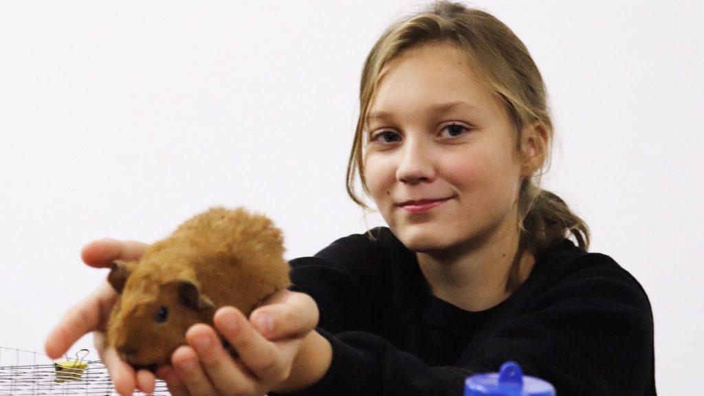 На выставке присутствовали морская свинка Пират с хозяйкой Ксенией Макаровой