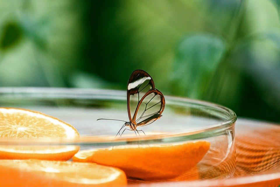 Ученые из Швейцарской высшей технической школы Цюриха объявили об успешном создании микроробота-бабочки / https://pixabay.com/ru/