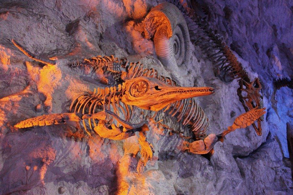 Найти хорошо сохранившийся скелет талаттозавра — большая удача для специалистов, даже несмотря на то, что обитали эти рептилии практически на всей территории Земли, pixabay.com