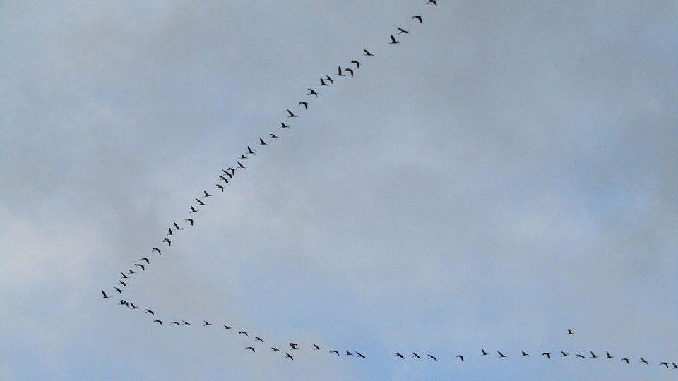 Стая перелетных птиц растянулась на невообразимые 145 километров, pixabay.com