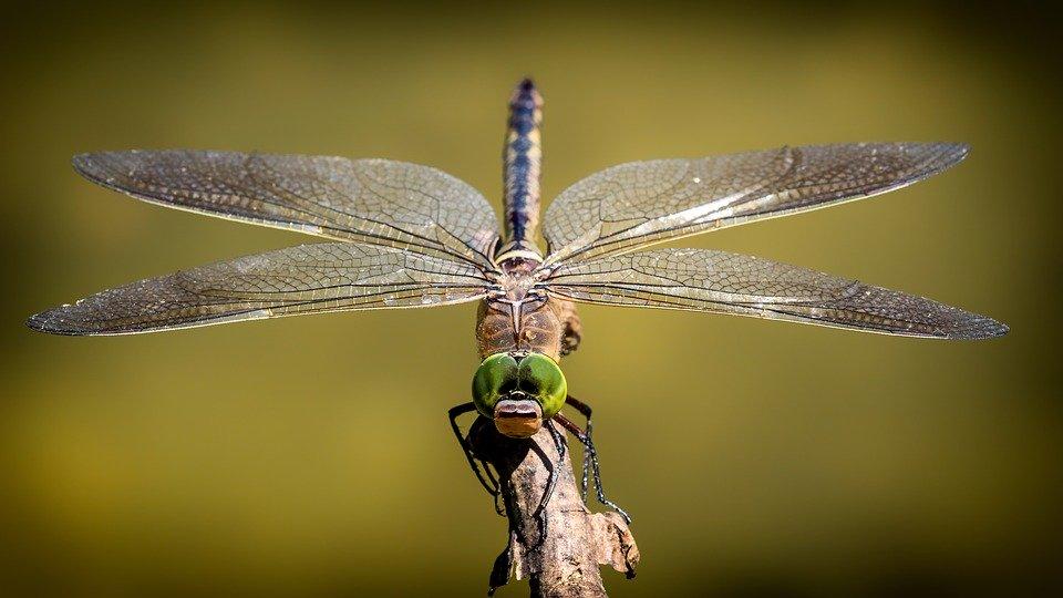 Совсем скоро с лица Земли могут исчезнуть почти 40 процентов видов насекомых, pixabay.com