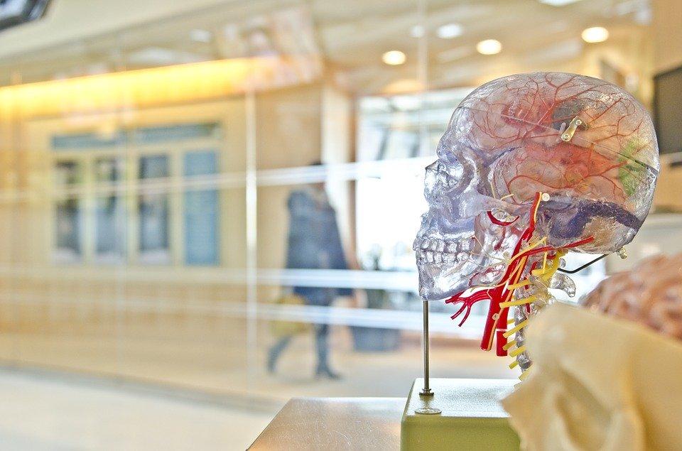 Нейрохакинг в нашей стране только начинают изучать. Различные эксперименты подтверждают: система «взлома» мозга работает, pixabay.com