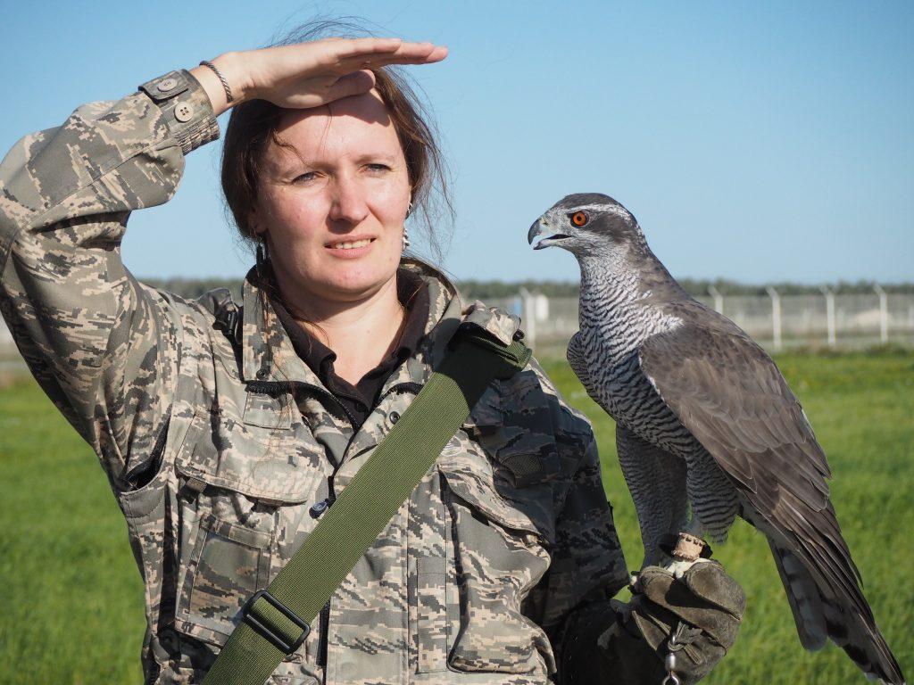 Специалист по обеспечению орнитологической безопасности полетов Ника Рыжова-Аленичева с ястребом-тетеревятником